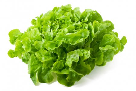 Photo for Close up of fresh butterhead lettuce isolated on white background - Royalty Free Image