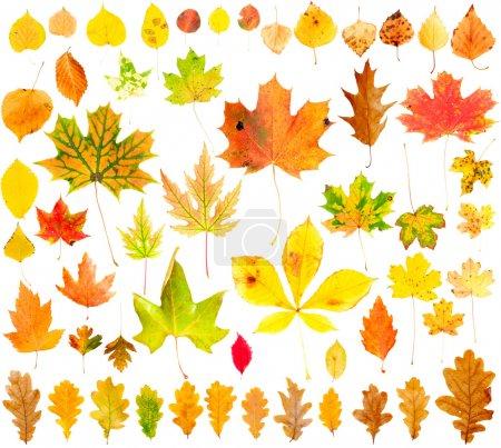 Herbstblättersammlung