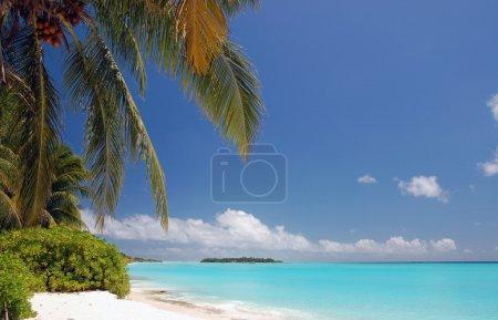 Photo pour Tropical beach Maldive avec eau turquoise, cocotiers et sable de corail - image libre de droit