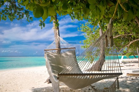 Photo for Beach Hammock under palm trees - Royalty Free Image