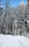 Pěšina v zimním lese