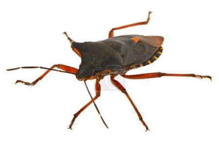 Bug on white