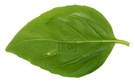 Photo for Macro of a single basil leaf against white background - Royalty Free Image
