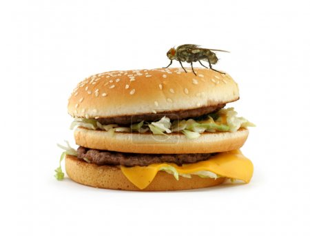 Photo for Home fly sitting on appetizing hamburger - Royalty Free Image