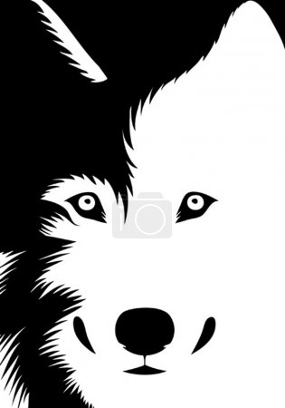 Illustration for Vector illustration of a wolf looking at us - Royalty Free Image