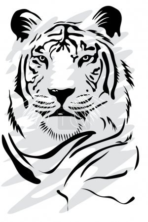 Illustration for Illustration of a gorgeus white tiger - Royalty Free Image
