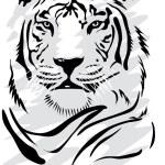 Illustration of a gorgeus white tiger...