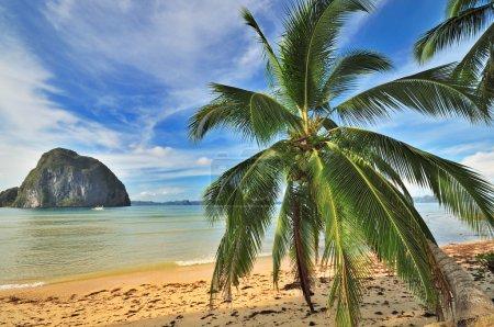 Bounty Paradise