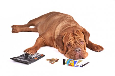 Photo pour Pas assez d'argent pour payer la dette de carte de crédit - image libre de droit