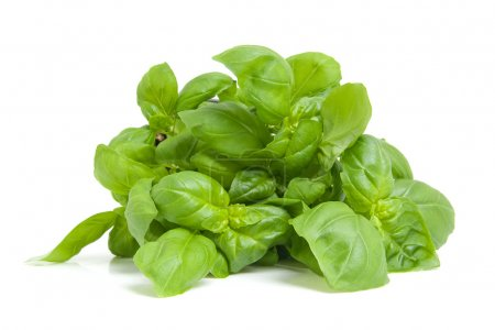 Photo for Fresh basil plant in closeup isolated on white background - Royalty Free Image