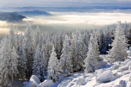 Photo pour Forêt de l'hiver, fraîcheur, gel, frosty, congelés, janvier - image libre de droit