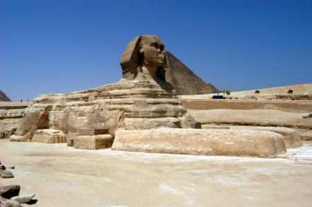 Great sphinx in Cairo