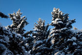Giorno dinverno