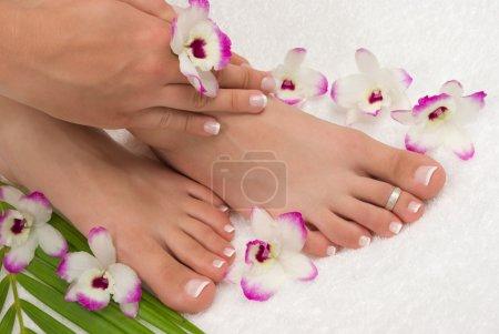 Photo pour Cure thermale avec belles orchidées exotiques - image libre de droit