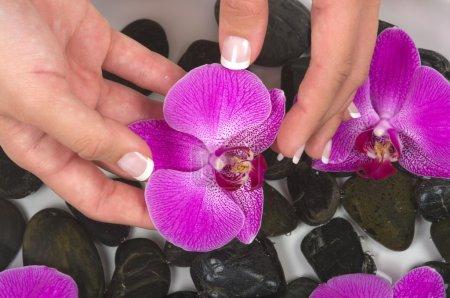 Photo pour Mains manucurées avec galets thérapeutiques, l'eau à base de plantes et orchidées magnifiques - image libre de droit