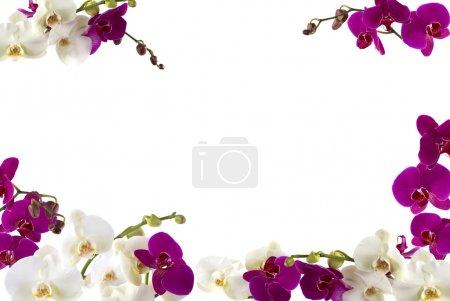 Foto de Frontera orquídea fresca - Imagen libre de derechos
