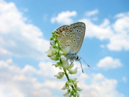 Photo pour Papillon assis sur une fleur sauvage sur fond de ciel - image libre de droit