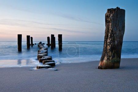 Photo pour Vieille épine sur les rives de la mer Baltique . - image libre de droit