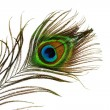 Detail of peacock feather eye isolated on white