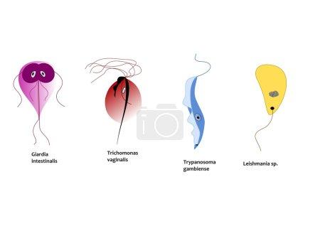 Parasitic protozoa infecting