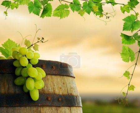 Wine barrel, grapes and grapevine