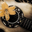 Composition of old guitar and flower of lily....