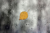 Rain on window with leaf