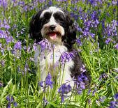 mignon chien poil long dans un domaine de blueb