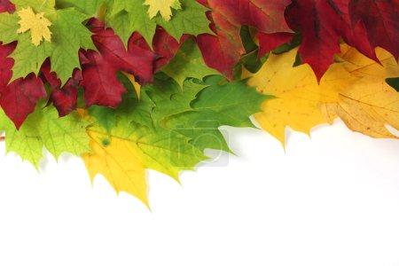 Photo pour Feuilles d'automne sur le bord avec espace blanc - image libre de droit