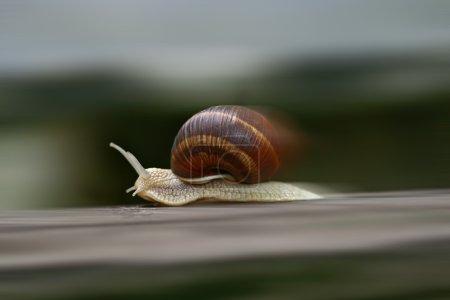 Photo pour Coup de feu de l'escargot excès de vitesse - image libre de droit