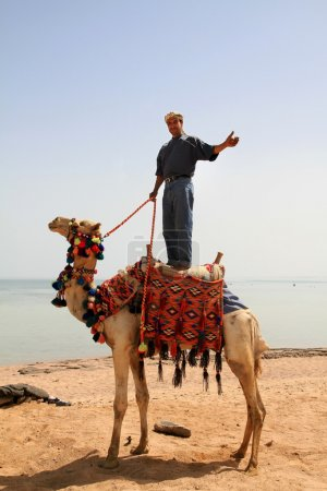 Photo for Beduin man on his camel in Egypt - Royalty Free Image