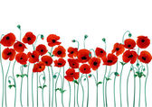 Vector illustration of beautiful red poppies