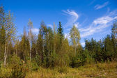 Autumn forest in warm sunny day