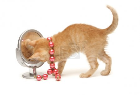 Ginger kitten with red beads and mirror