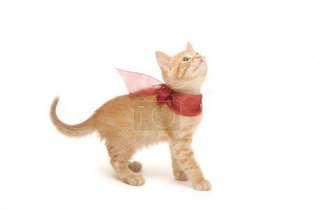Ginger kitten with red bow