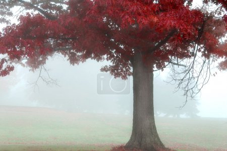 Photo for Colorful autumn landscape scene in foggy misty morning - Royalty Free Image