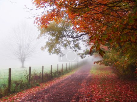 Photo for Misty autumn morning path along fence in country setting - Royalty Free Image