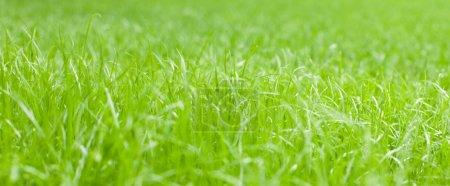 Photo pour Herbe ensoleillée vert vif. petit GRIP - image libre de droit
