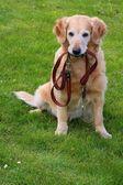 Kutya- és ő póráz