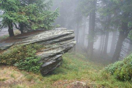 Photo pour Forêt mystérieuse avec vue sur le brouillard à venir - image libre de droit