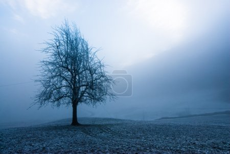 Moody winter tree