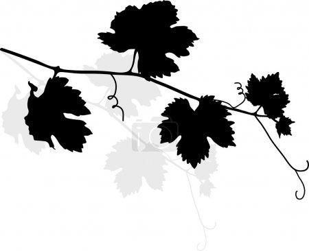 Illustration pour Feuilles de vigne noires - illustration vectorielle - image libre de droit