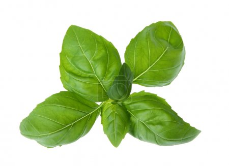 Photo for Fresh basil isolated on white background - Royalty Free Image