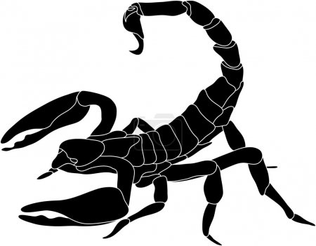Illustration for Vector - color scorpion isolated on white background - Royalty Free Image