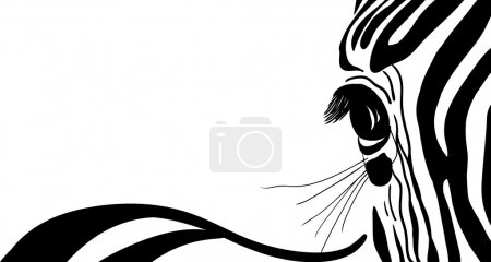 Illustration for Vector - zebra banner for yor text - Royalty Free Image