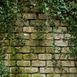 Ivy growing on a ancient brick wall