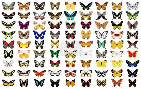 Illustration pour Illustration vectorielle en couches de divers papillons. - image libre de droit