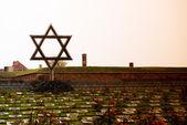 Jewish star in cemetery in Terezin