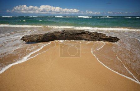 Inviting Tropical Shoreline & Driftwood