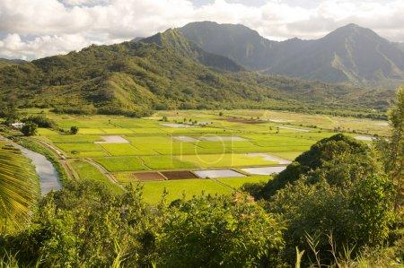 Foto de Campos del valle y taro Hanalei en kauai, hawaii - Imagen libre de derechos